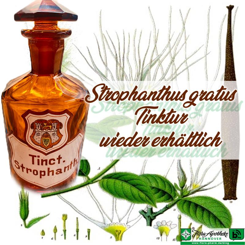 Strophanthus gratus Tinktur Flora Apotheke Hannover