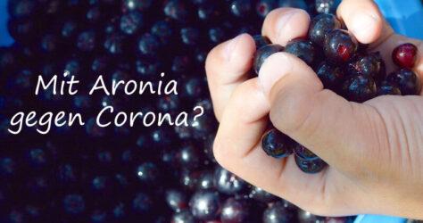 Aronia gegen Corona
